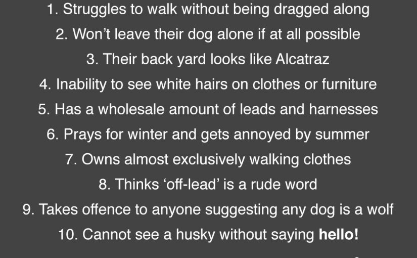 10 Ways to Identify a Husky Owner!